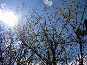春の予感③(*^。^*)
