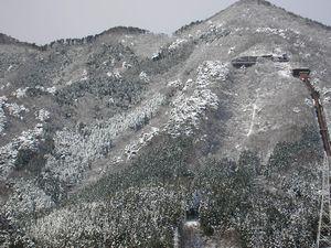 雪が降りました♪