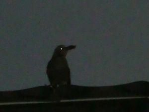ひな鳥6.JPG