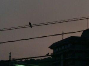 夫婦鳥.JPG
