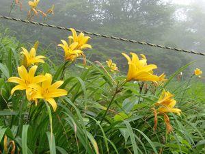 霧降高原リフト