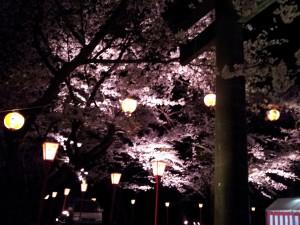 夜桜祭り♪