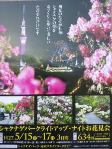 シャクナゲパークライトアップ☆ナイトお花見会