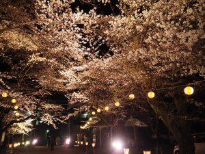 夜桜大宴会★満開の中での開催でした(^^♪