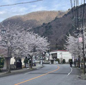 桜咲く♪春のお便り